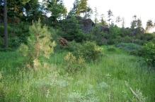 12 acre new 16