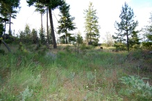12 acre new 2