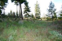 12 acre new 6